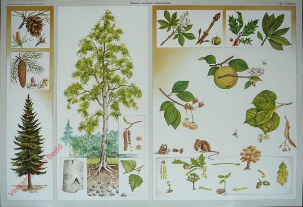 5 - Bomen