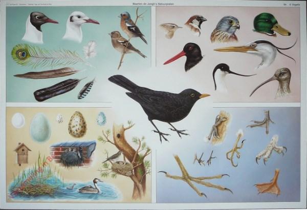 6 - Vogels