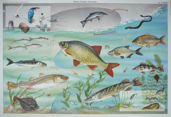 10 - Vissen