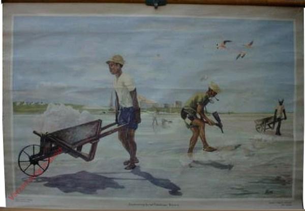 6 - Zoutwinning in het pekelmeer. Bonaire