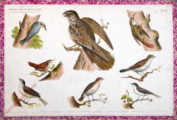 III - [Nachtzwaluw, boomkruiper, boomklever, e.a.]