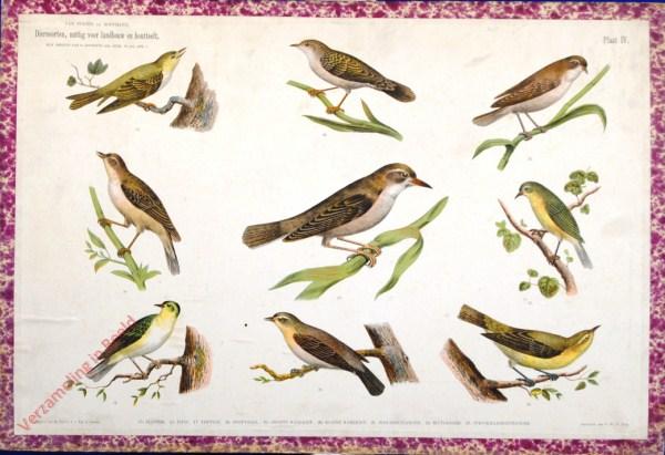 IV - [Kleine zangvogels]