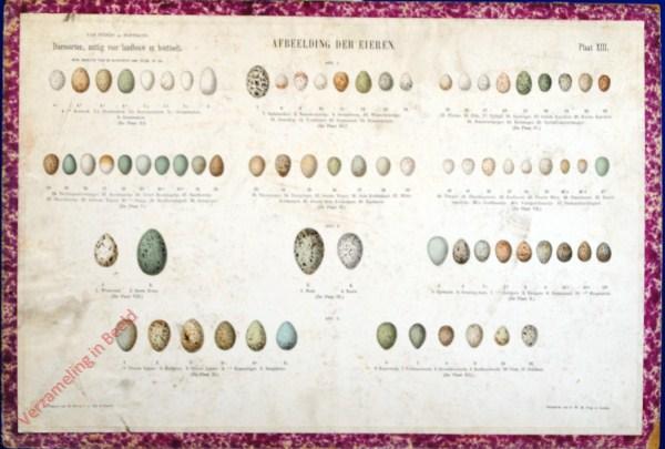 XIII - Afbeelding der eieren