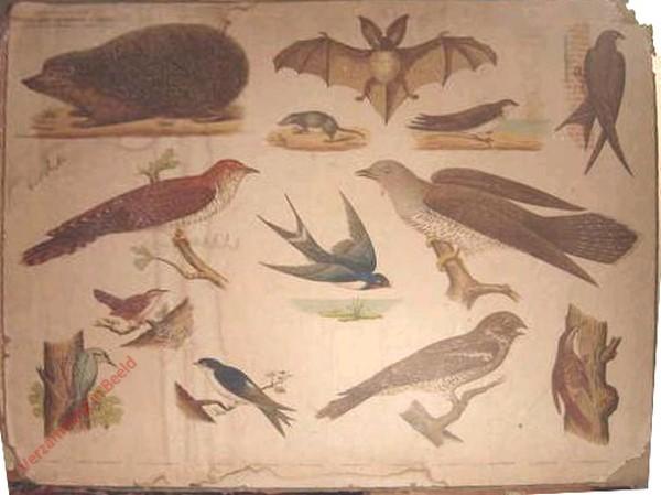 I - [Egel, vleermuis, nachtzwaluw, winterkoning, e.a.]