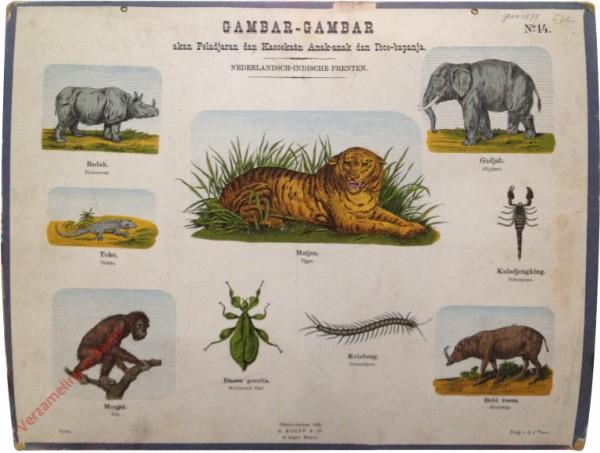 Matjan, tijger - Indische dieren