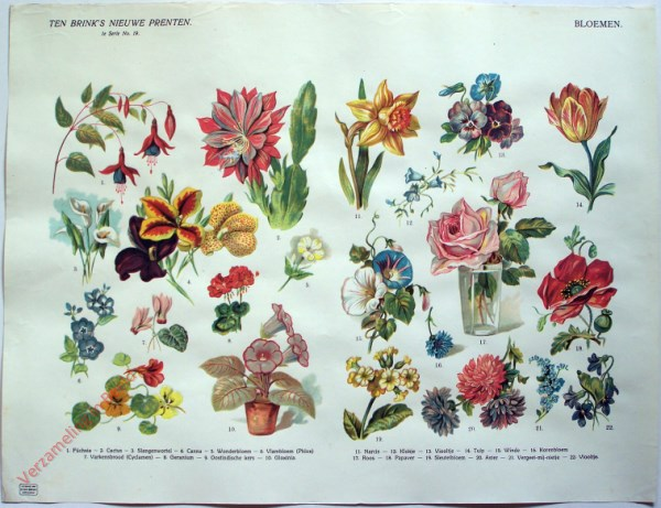 1e serie nr. 19 - Bloemen