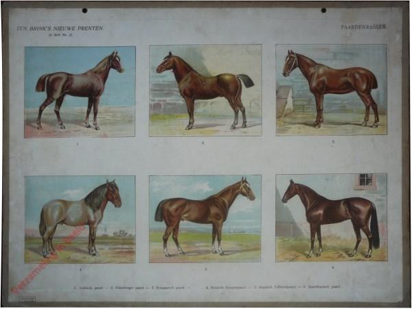 2e serie nr. 37 - Paardenrassen