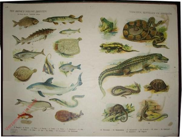 2e serie nr. 43 - Visschen, reptielen en amfibien