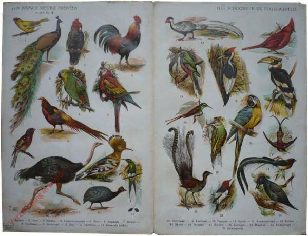 2e serie nr. 44 - Het schoone in de vogelwereld