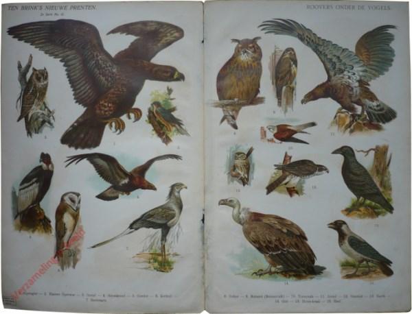 2e serie nr. 45 - Roovers onder de vogels