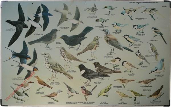 1 - Zwaluwen, mezen, lijsters, zangvogels