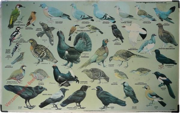 3 - Hoenders, spechten, duiven, kraaien, enz.
