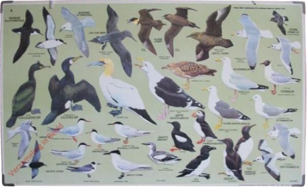 5 - Zeevogels