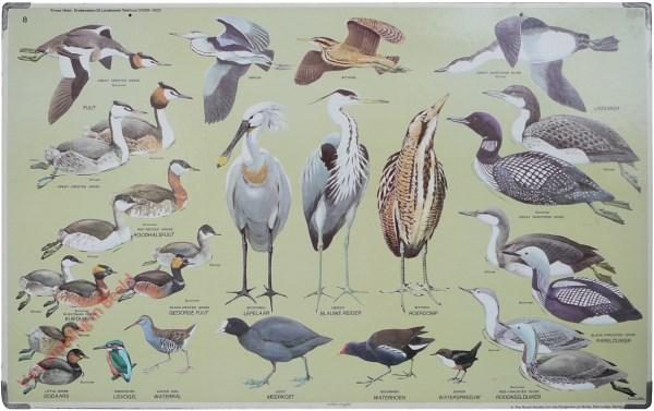 8 - [Watervogels]