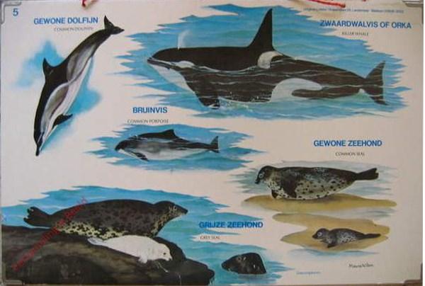 5 - Zeezoogdieren