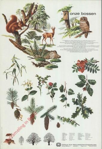 Onze bossen