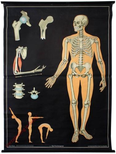 1 - Das Knochengerüst