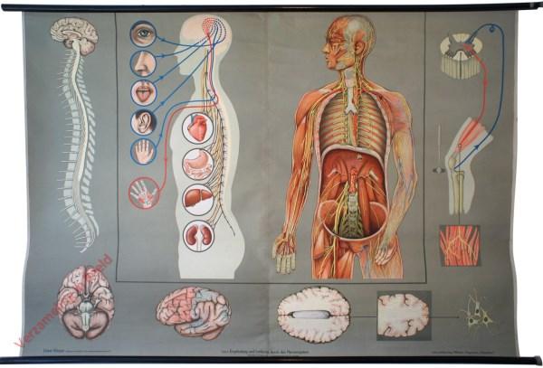 6 - Empfindung und Lenkung durch das Nervensystem