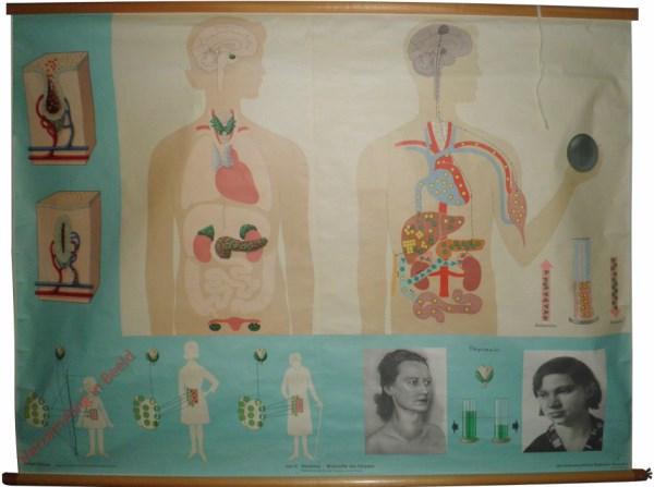10 - Hormone - Wirkstoffe der Körpers