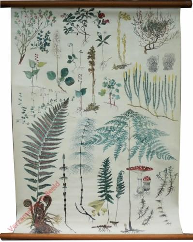 [Planten van het naaldbos]