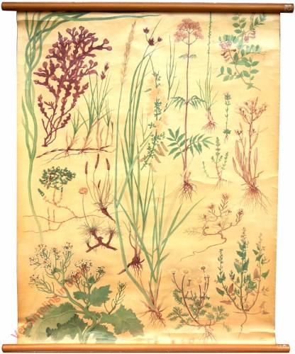 [Planten van strand en duin]