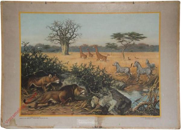 5 - Aan den rand der Kalahari