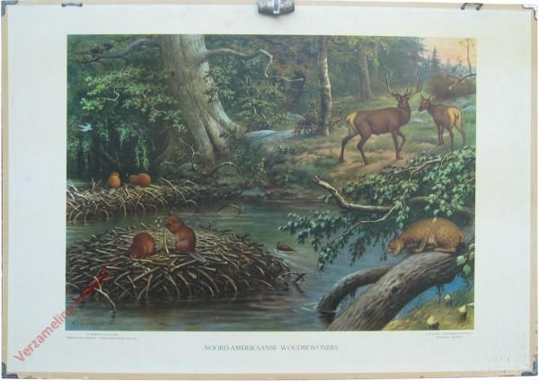 7 [var1] - Noord-Amerikaansche woudbewoners
