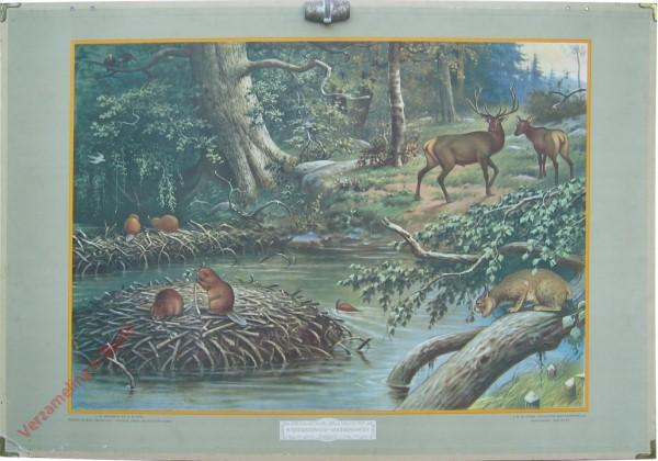 7 - Noord-Amerikaansche woudbewoners