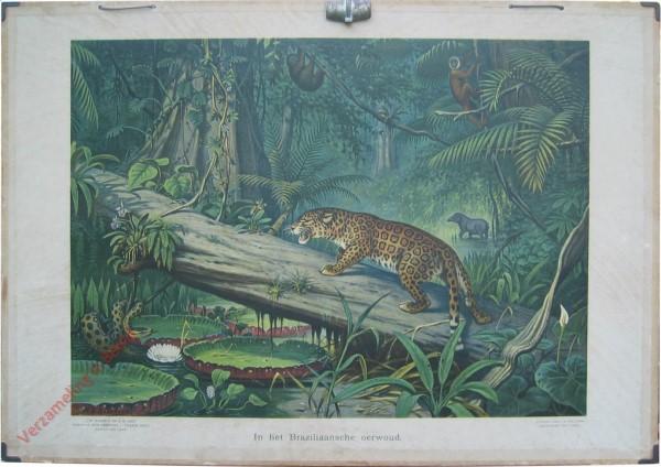 8 [var1] - In het Braziliaansche oerwoud
