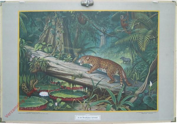 8 - In het Braziliaansche oerwoud