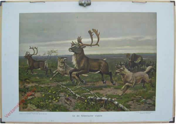 9 [var1] - In de Siberische vlakte