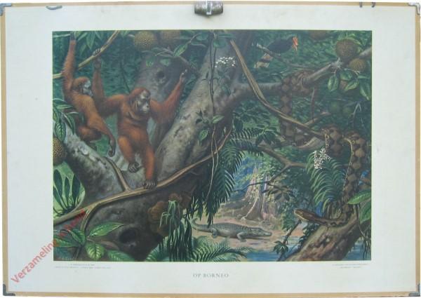 10 [var1] - Op Borneo