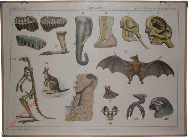 6 - Bijplaat - In de rimboe + Uit de Australische dierenwereld