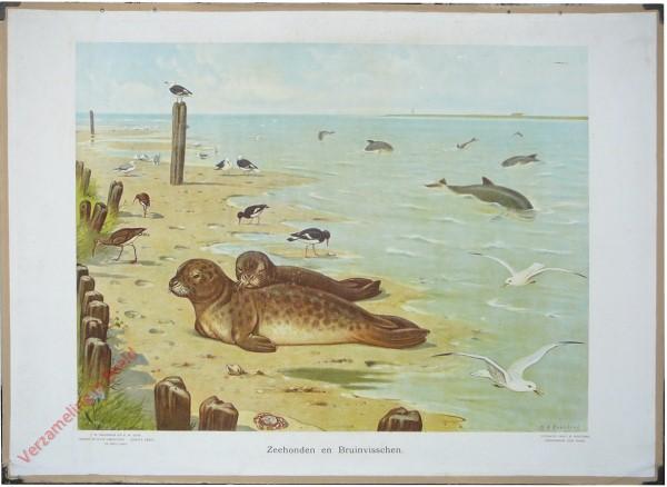 5 - Zeehonden en Bruinvisschen