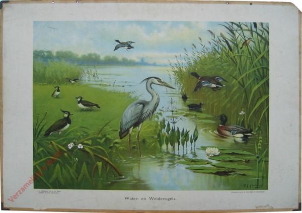 7 - Water- en Weidevogels [wegvliegend mannetje]