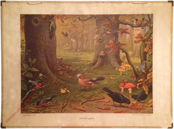 8 [var1] - Boschvogels [Twee mannetje merels en goudvinken]