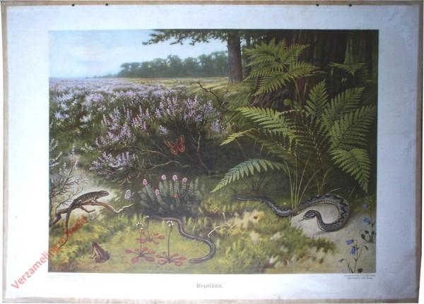 9 - Reptilien