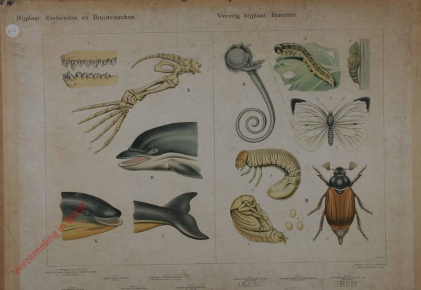 5 - Bijplaat: Zeehonden en Bruinvisschen; Vervolgbijplaat: Insecten