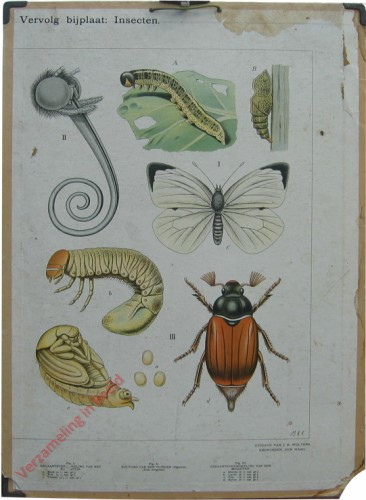 5 - Vervolgbijplaat: Insecten [Halve plaat]