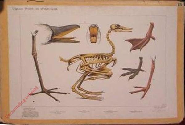 7 - Bijplaat: Water- en Weidevogels