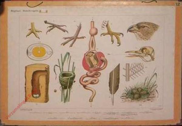 8 - Bijplaat: Boschvogels