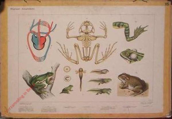 10 - Bijplaat: Amphibien