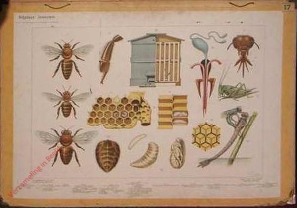 12 - Bijplaat: Insecten