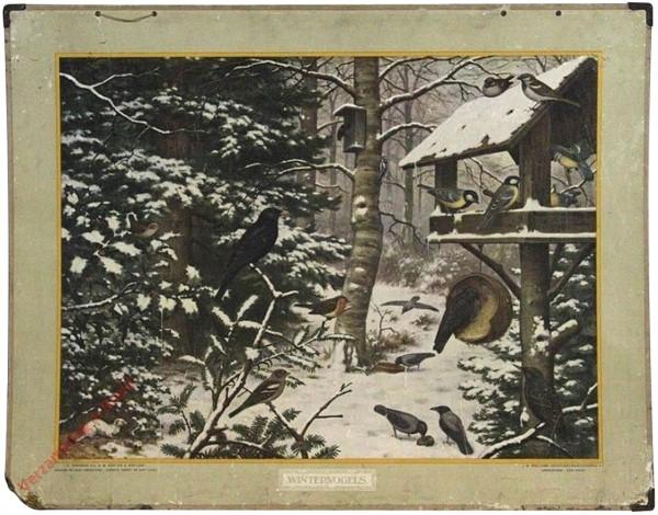 6 [var1] - Wintervogels