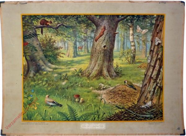 12 [var1] - In het bosch