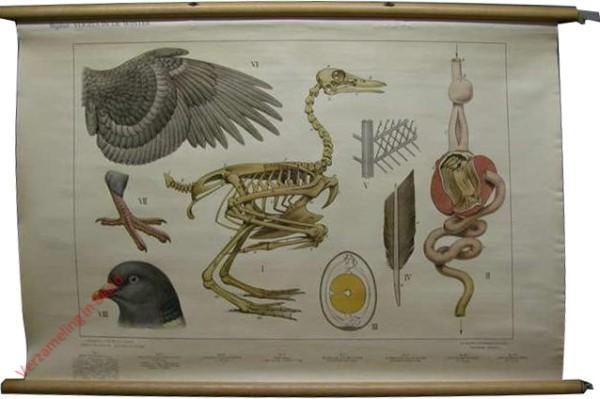 6 - Bijplaat - Wintervogels