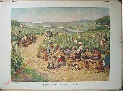 6 - Wijnbouw in Champagne - Frankrijk