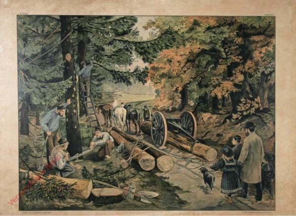1e serie - Winterhalfjaar - Timmeren - 1 - In het bosch