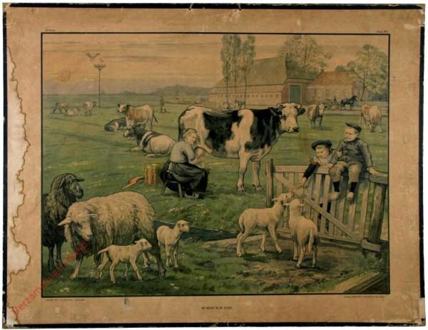 2e serie - Zomerhalfjaar - Grasland - 1 - De weide in de lente
