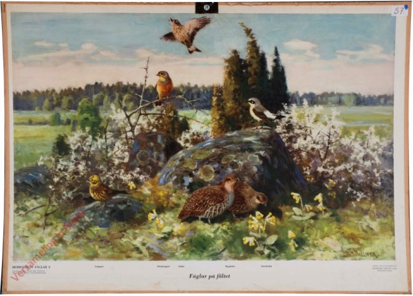 2 - Fåglar på fältet [Zweeds]